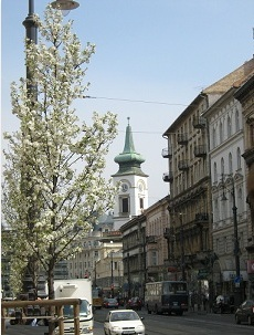 Cherry tree in bloom and the steeple of the church on Kálvin Tér, Budapest